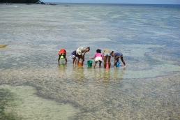 Local young girls collecting musles during low tide